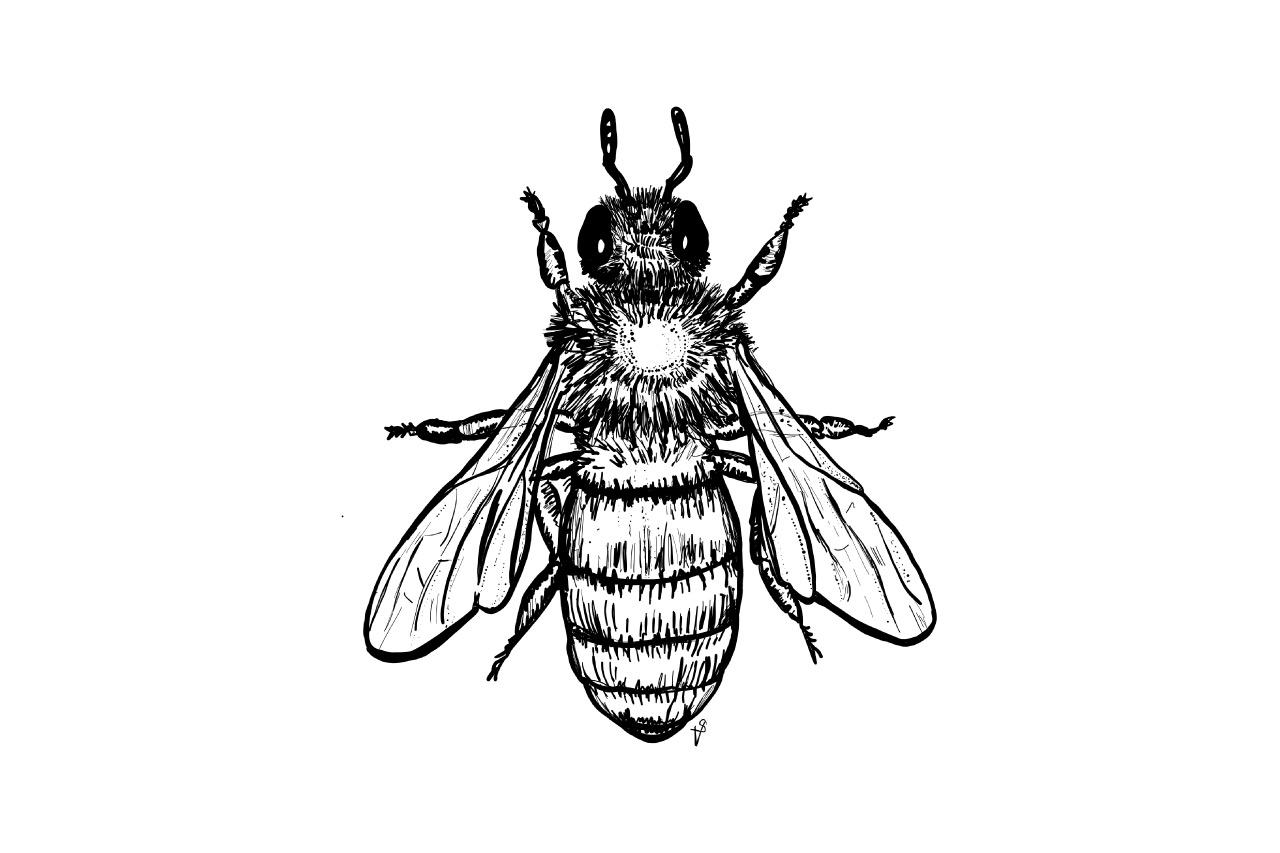 Schädlingsbekämpfung Brodowski: Bienen Als Bestäuber