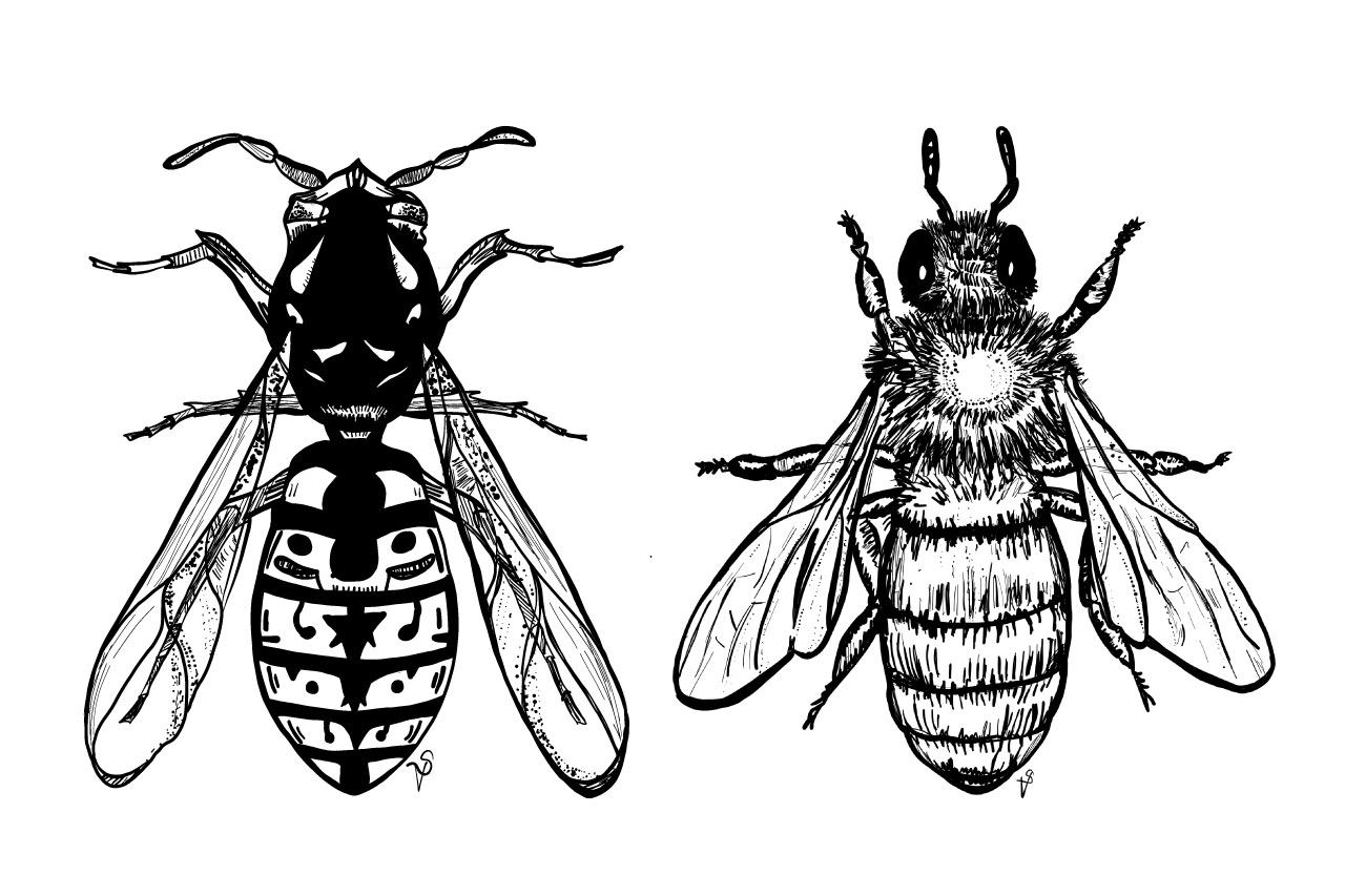 Schädlingsbekämpfung Brodowski: Biene Und Wespe